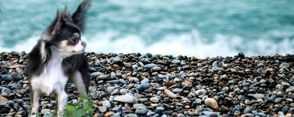 Fanny-Rocks-e1466868052565